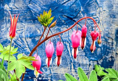 Bleeding Heart Download Jigsaw Puzzle