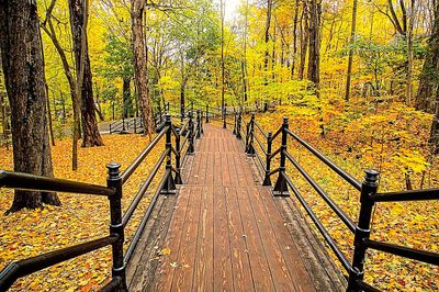 Forest Walkway Download Jigsaw Puzzle