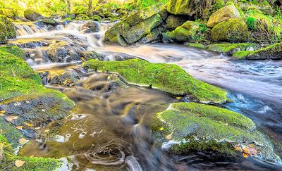 Stream, Yorkshire Download Jigsaw Puzzle