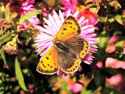 Butterfly Download Jigsaw Puzzle