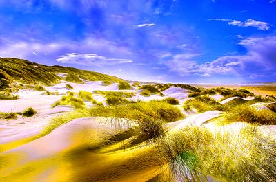 Dunes, North Sea  Download Jigsaw Puzzle