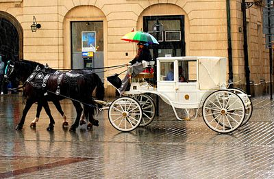 Carriage Download Jigsaw Puzzle